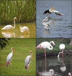 Birds at Taman Wetlands, Putrajaya