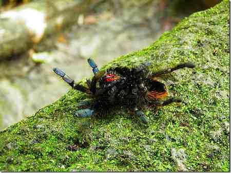 Spider at Gunung Angsi