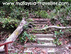 Overgrown Pathway at Ampang Forest Reserve