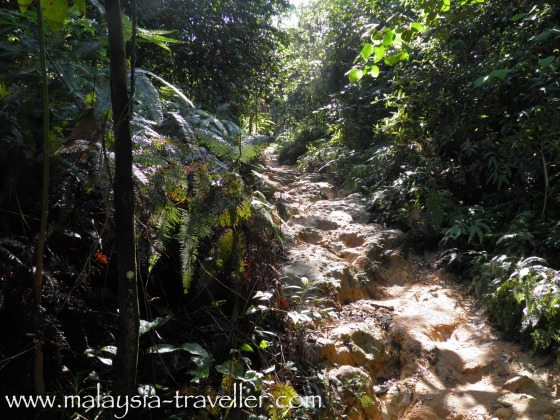 Eroded Trail at Ayer Hitam Forest Reserve