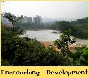 Encroaching Development at Bukit Gasing.