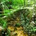 Bukit Gasing Forest Park