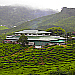 Cameron Highlands Tea Estate