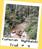 Trail # 4, Cameron Highlands