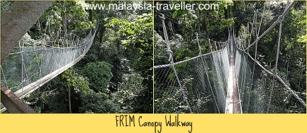 & FRIM Canopy Walk