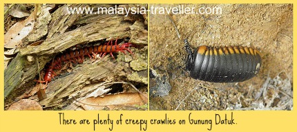 Some of the insects seen at Gunung Datuk.