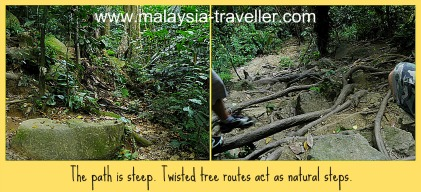 The path and vegetation at Gunung Datuk.
