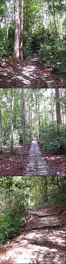 Trail to Puteri Waterfalls at Gunung Ledang National Park