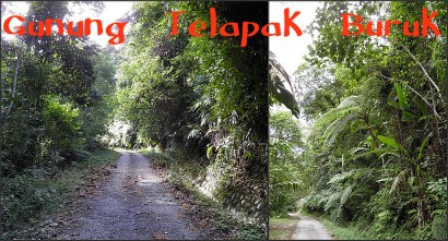 The path up Gunung Telapak Buruk