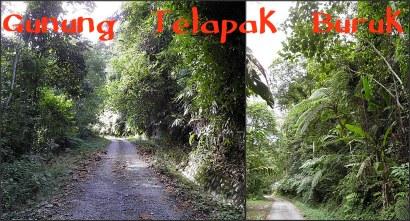 The path up Gunung Telapak Buruk
