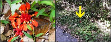 Flower on Gunung Telapak Buruk