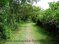 Trail at Kuala Selangor Nature Park