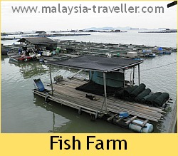 Fish Farm at Kukup