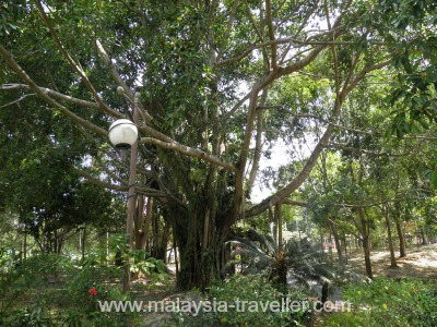 Hibiscus Garden at Labuan Botanical Garden