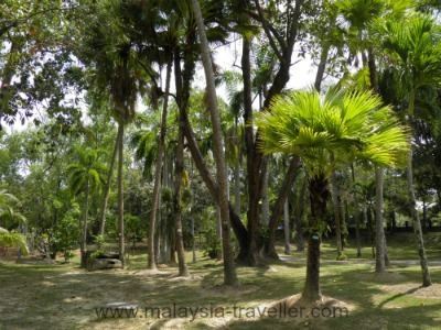 Palms in Labuan Botanical Garden