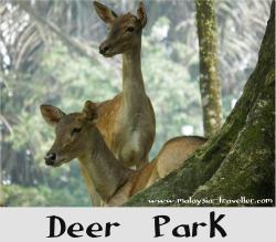 Deer Park, Kuala Lumpur