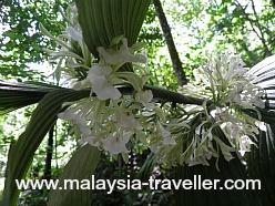 Palms in flower