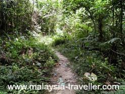 Trail at Bukit Kiara Park