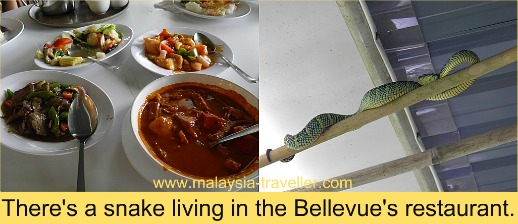 The resident snake at the Bellevue Penang Hill Hotel