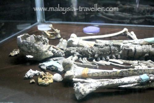 Perak Man Skeleton