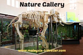Perak Museum Nature Gallery