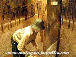 Diorama of a rubber plantation at Petaling Jaya Museum