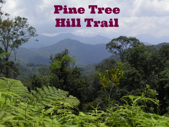 View of Pine Tree Hill Trail