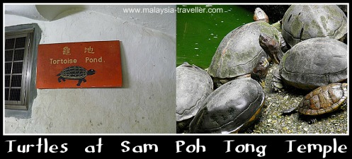 Turtles at Sam Poh Tong Cave Temple