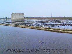 Paddy Fields and Swiftlet Farms at Sekinchan