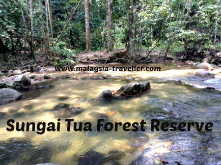 Clear river at Sungai Tua Recreational Forest