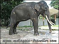 Top Selangor Attractions Zoo Negara