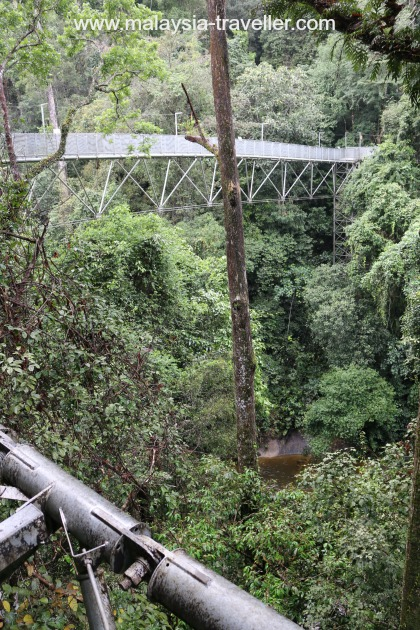 Tree Top Walk Sungai Sedim