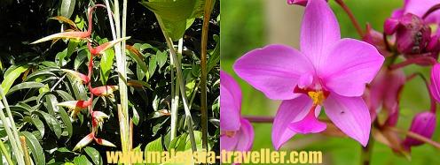 Heliconia and Orchids at Taman Wawasan