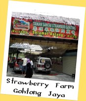 Strawberry Farm, Gohtong Jaya