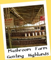 Mushroom Farm, Genting Highlands