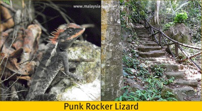 Lizard at Gua Kelam