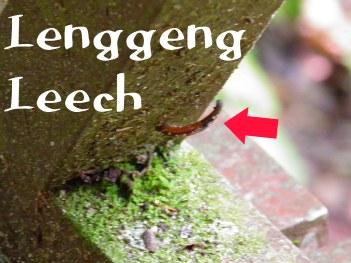 Leech at Hutan Lipur Lenggeng