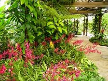 KL Orchid Garden