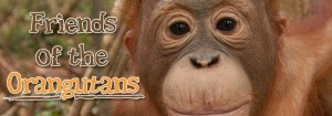 Friends of the Orangutans
