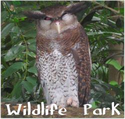 Sunway Lagoon Wildlife Park