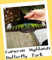 Butterfly Farm, Cameron Highlands Malaysia