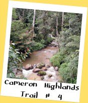 Trail # 4, Cameron Highlands