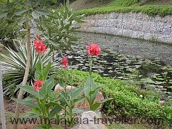 Lily pond in Taman Wawasan