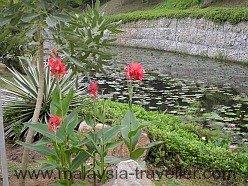 Lily pond in Taman Wawasan