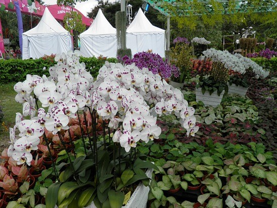 There will be an orchid competition this year.