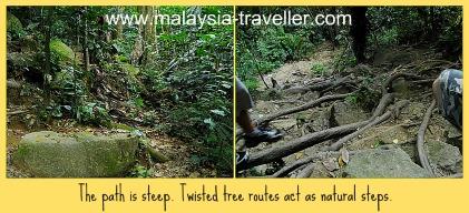 The path and vegetation at Gunung Datuk.