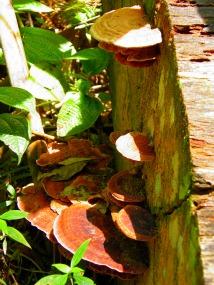 Fungi on Gunung Telapak Buruk