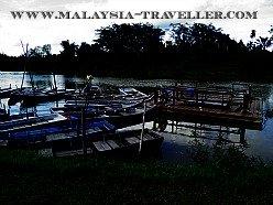 Fireflies at Kg. Kuantan