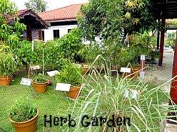 herb garden at Laman Padi Langkawi