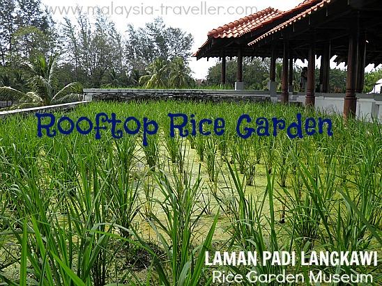 Rooftop Rice Garden at Laman Padi Langkawi